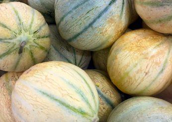 melon antilles
