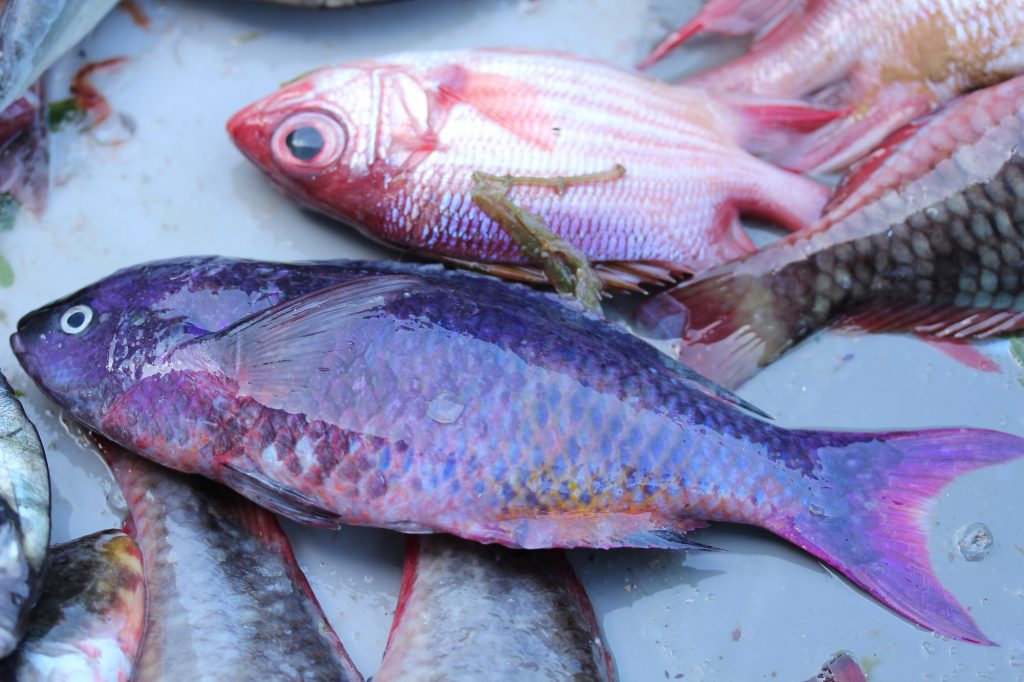 Carpe : poisson tropical