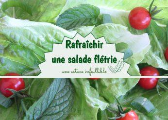 rafraîchir salade