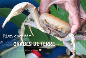 choisir les crabes de terre guadeloupe