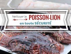 nettoyer le poisson lion Martinique Guadeloupe